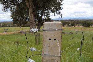 A corner fence post in a green paddock in Greta, Victoria